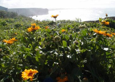 Primavera na Costa Vicentina