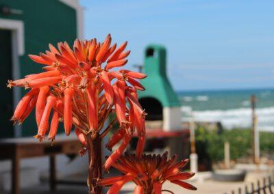 Flor de aloé