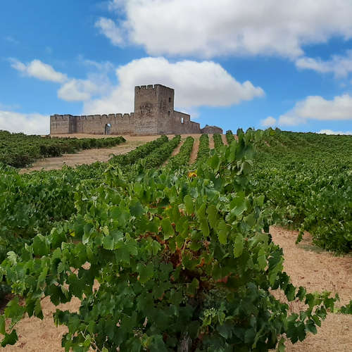 Wein und Burg Valongo